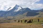 Heavenly mountains of Kyrgyzstan, horses